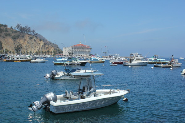 Catalina Island 103