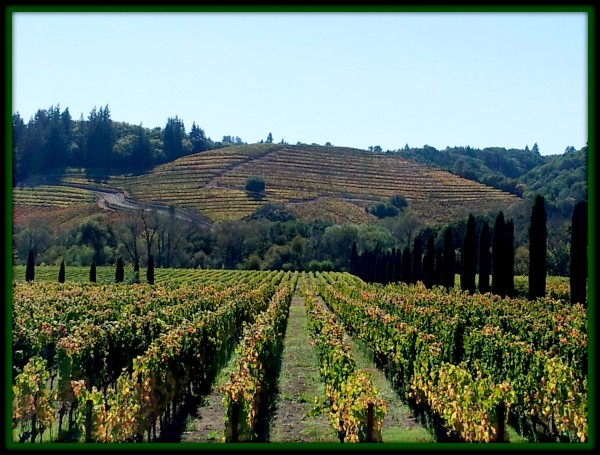 Ferrari-Carano Vineyards