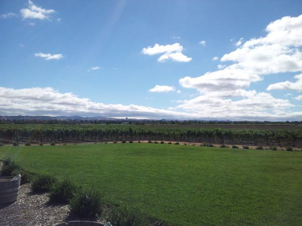 Enriquez-Wine-Estates