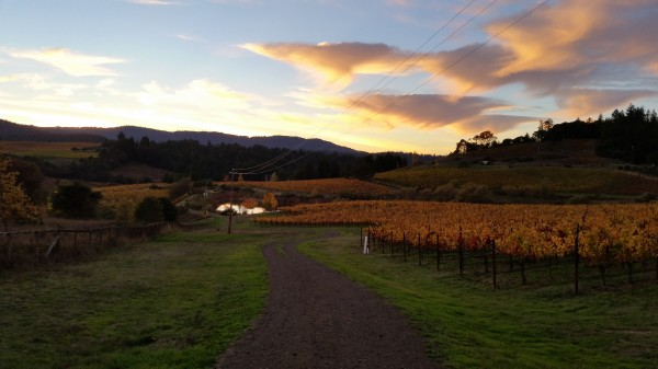 Vineyard-Sunset