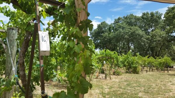 Acorn-Winery