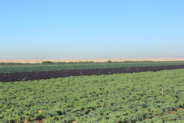 Lakeside-Organic-Farms