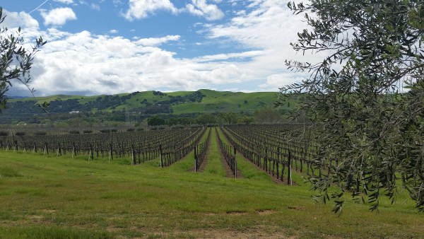 Wine-Country-Livermore