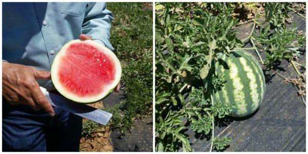 fresh-watermelon
