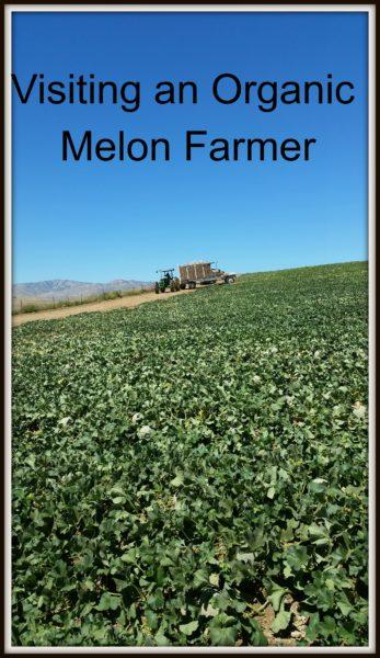 Organic-Melon-Farmer
