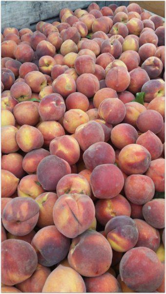 Wawona-Peaches