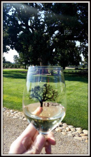 Oak-Tree-Oak-Farm