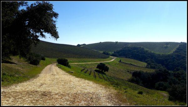 Alta-Colina-Vineyards